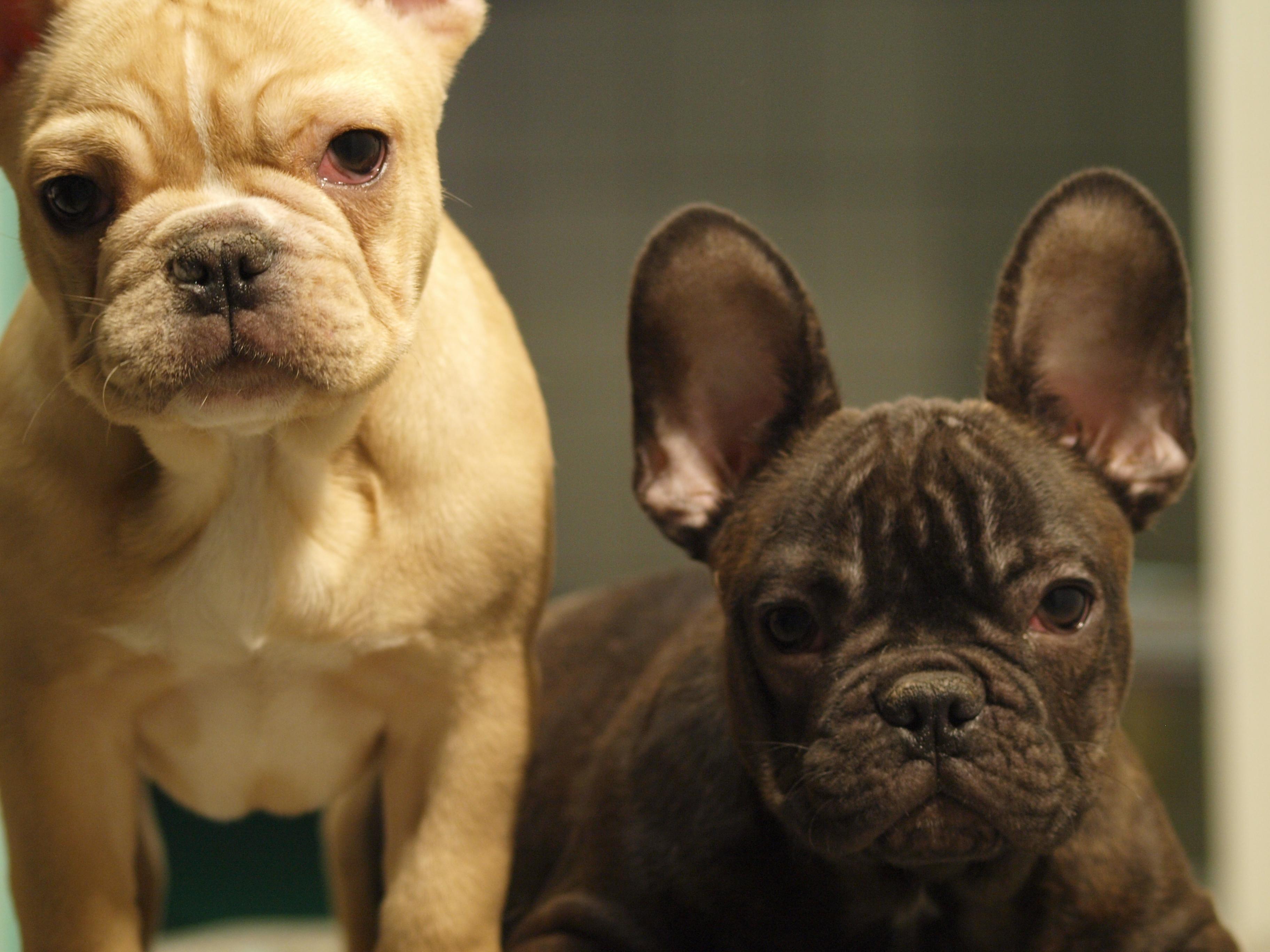 Üdvözöljük a Sanovet-dent Állatorvosi Rendelő honlapján!